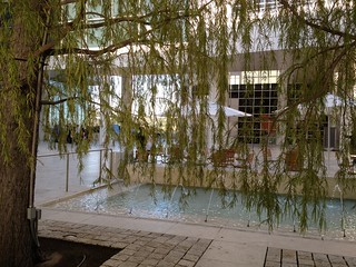 Weeping Willow at the Getty