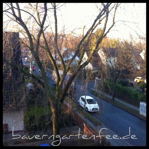 Frühlingsmorgen am 3. januar 2012
