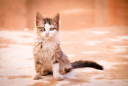 [フリー画像素材] 動物 1, 猫・ネコ, 子猫・小猫 ID:201201070400
