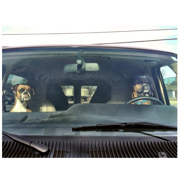 Gone to the Dogs #dogsincars #dogsrule
