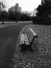 Lonely park bench.