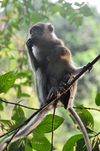 Monkeys (mother and baby)