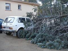 L'arbre tombé sur la voiture de nos voisins