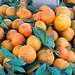 January 8: Farmers Market Oranges