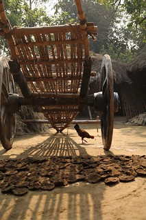 Farm cart, chicken and manure drying for fuel in West Bengal, India