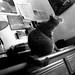 j.r. always on my desk by pzdon