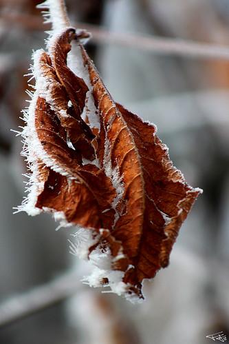 Invierno otoñado