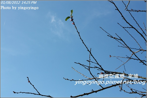 南投信義鄉_東埔20120108_I2391