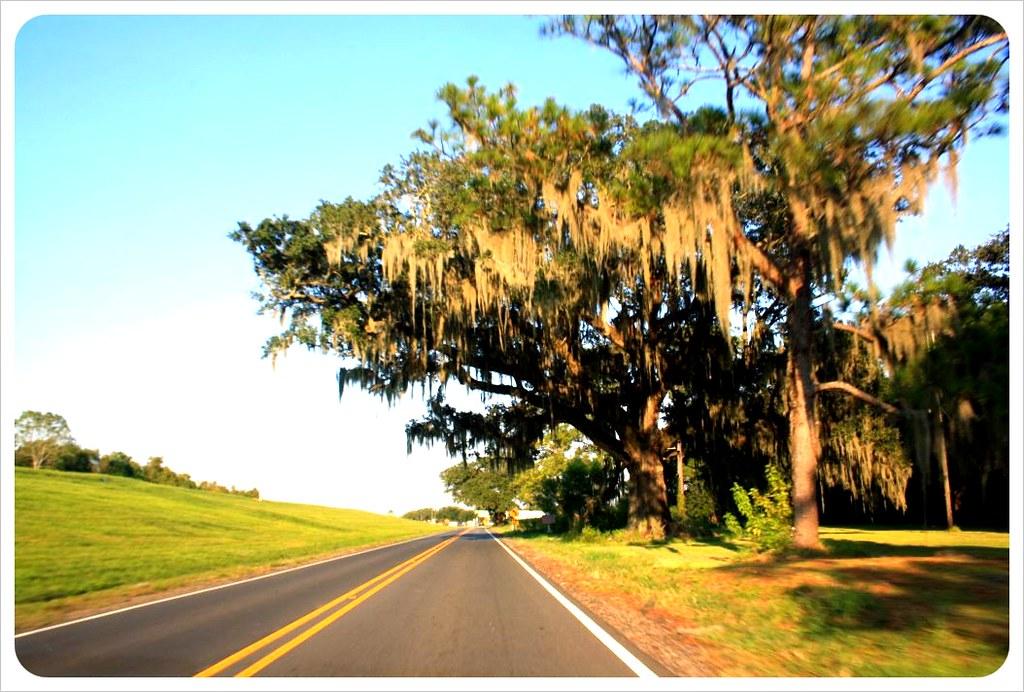 road with oaks in louisiana