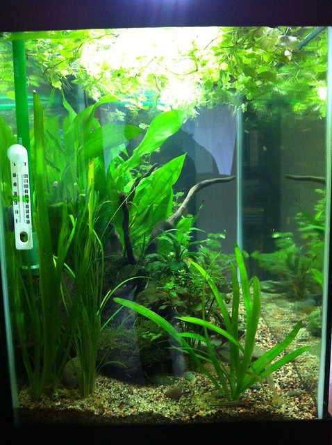 65 gallon planted tank setup journal page 10 for 65 gallon fish tank