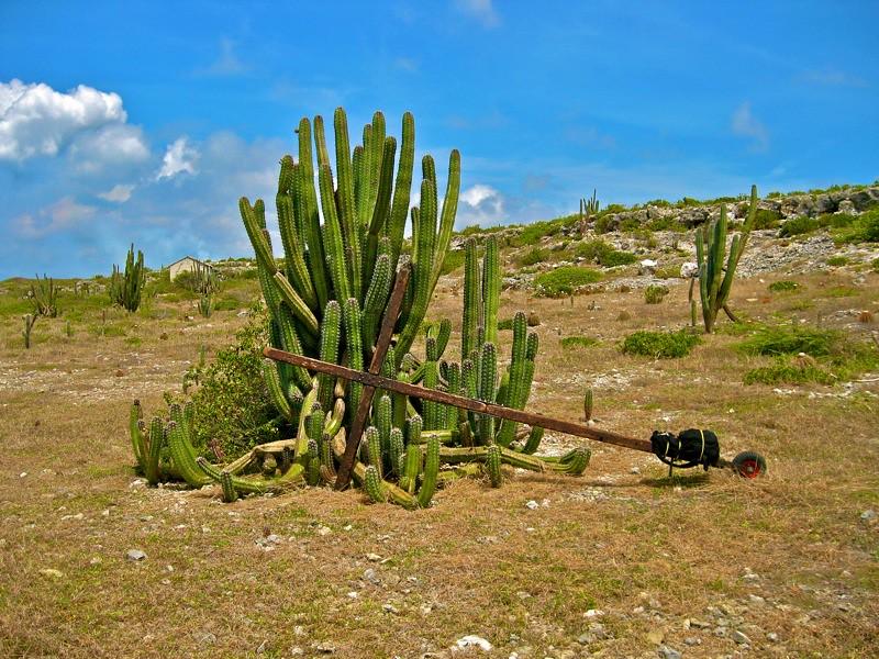 Aruba Image3