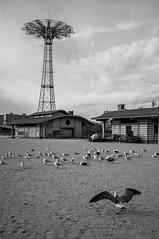 Coney Island Bird Boss