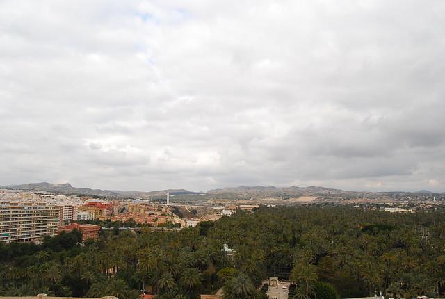 Vistas del Palmeral de Elche desde la Basílica menor de Santa María