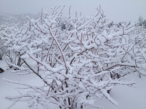 winter washington state organic farm