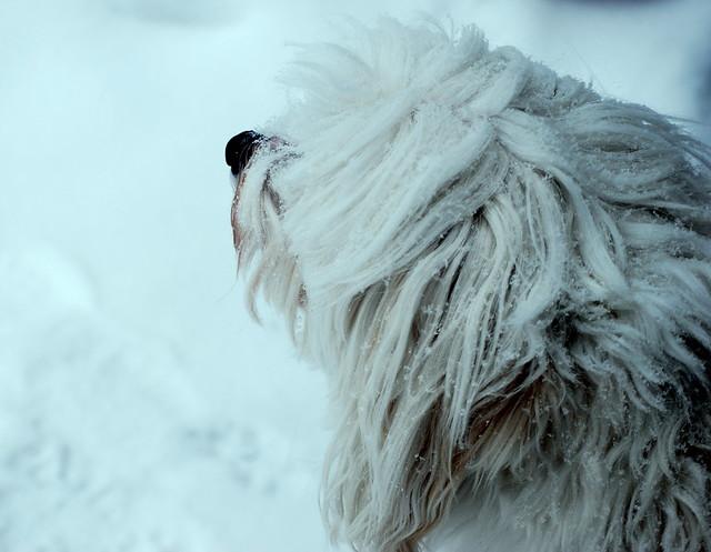 Moose snow tint