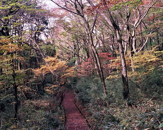Hakone Hike, Japan, Mamiya 7