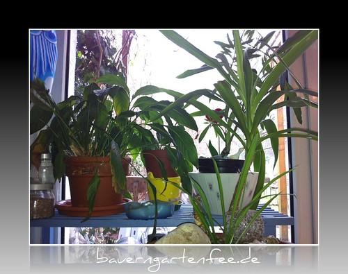 MeinePflanzen am Küchenfenster