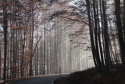 road light fog forrest bend croatia hrvatska flickrdiamond