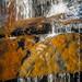 Reedy Falls-3599
