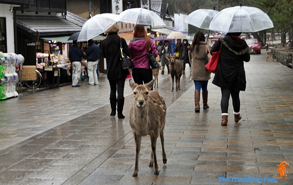 deers greet you on your way to the temple