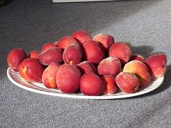 starr-160317-0572-Prunus_persica_var_persica-Flordaprince_fruit_harvest-Hawea_Pl_Olinda-Maui