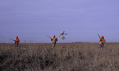 Pheasant flush