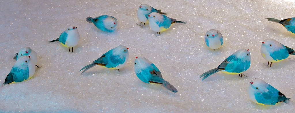 332/365 Bluebirds