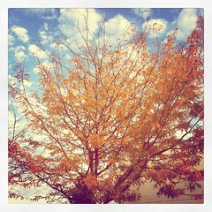 Autumnal Instagram 2011