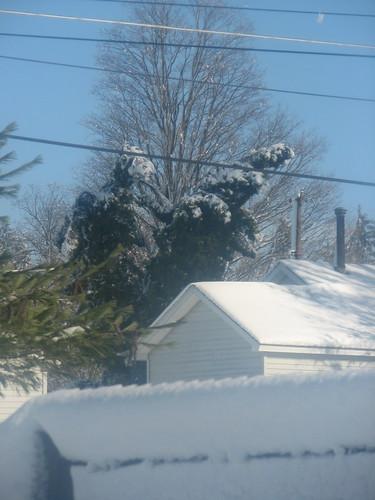 Snow Storm 11-29-11 5
