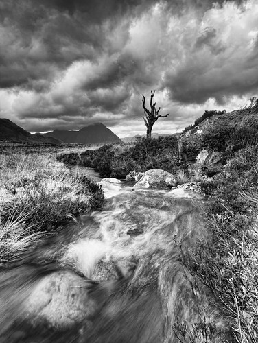 The Rannoch Tree by wilsonaxpe