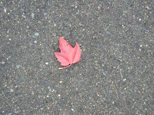 Red Leaf _ 8137