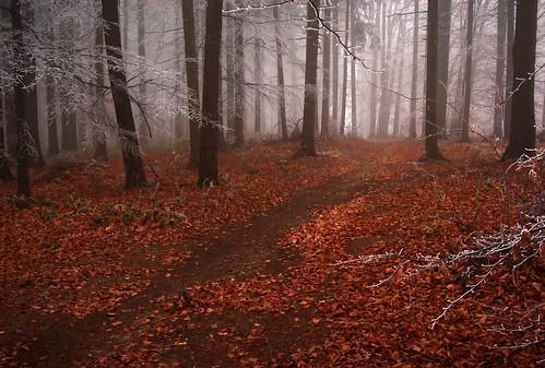 autumn mist fall leaves misty fog forest highlands colours silent view czech foggy silence czechrepublic dreamy overlook leafs melancholic vysočina česko českárepublika vysocina vrchovina ceskomoravska czechmoravian českomoravskávrchovina ceskomoravskavrchovina czechmoravianhighlands