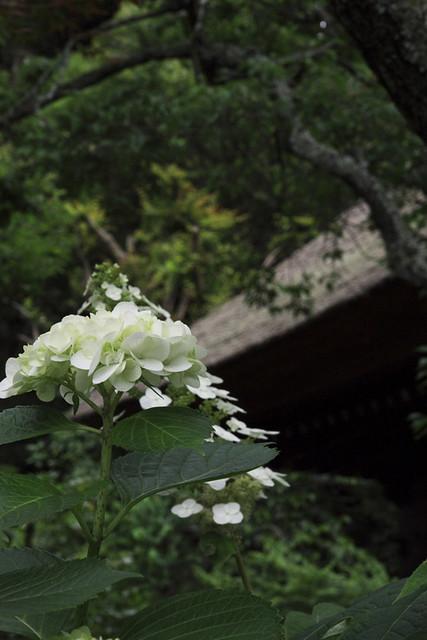 110615_125706_北鎌倉_東慶寺
