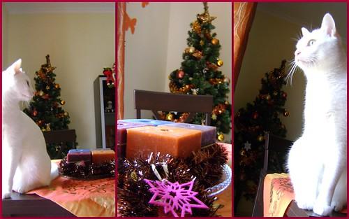 Feliz Natal!! by Ana Tarequita