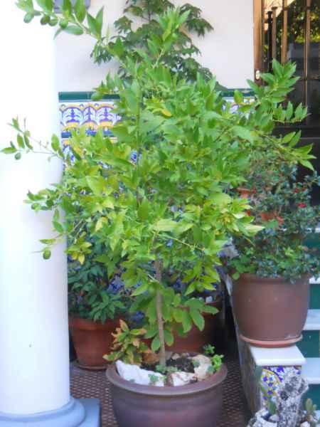 Jardín andaluz la soleá 5