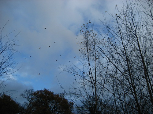 Crows in the sky by Snaresbrook Crown Court