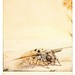 018-La abeja esfinge-The life of the bee 1901-Ilustrada por Edward Detmold