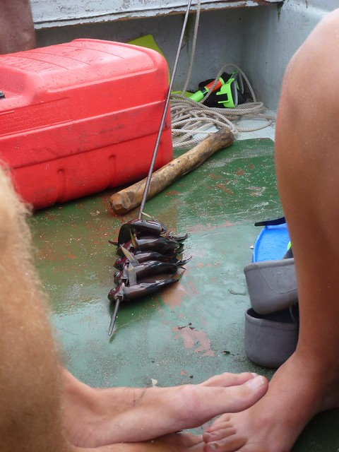 Shark food and the Swed's legs, guess which one belong to Joel