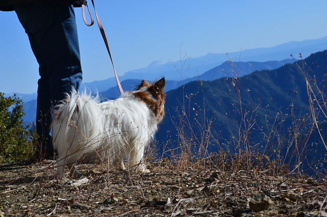Papillon Lookout