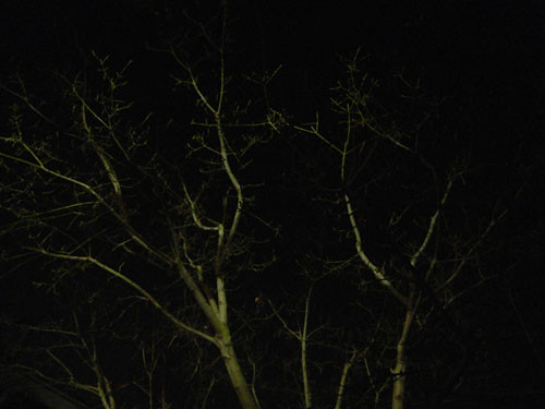 Trees at Night _ 9267