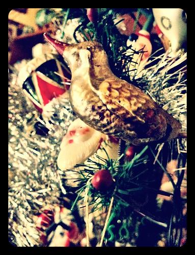 Buon Natale by Circle by Seba