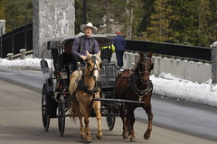racing(0.0), pack animal(0.0), amish(1.0), vehicle(1.0), transport(1.0), coachman(1.0), horse(1.0), horse harness(1.0), horse and buggy(1.0), carriage(1.0),