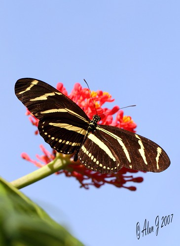 canon butterfly niceshot florida 7d supershot specanimal 100mmmacrof28lisusm