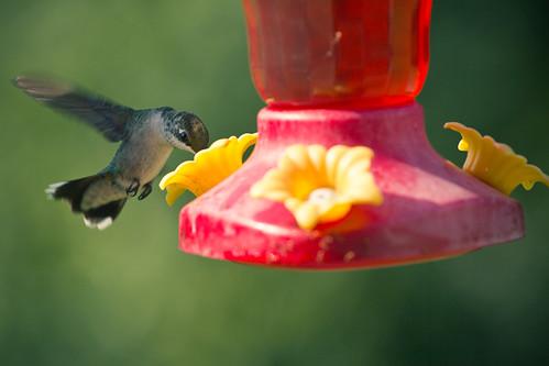 110806 Hummingbird