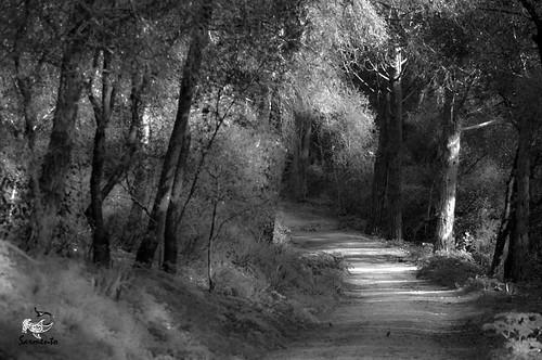 Caminho by Luis G. Sarmento