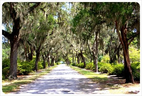 bonaventure cemetery avenue