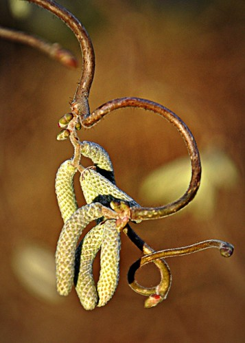 01-07-12 Harry Lauder's Walking Stick by roswellsgirl