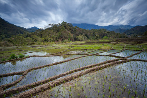travel flores reflection indonesia day cloudy ricefield ende