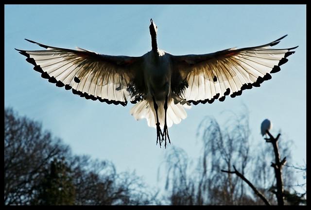 wingspan ...