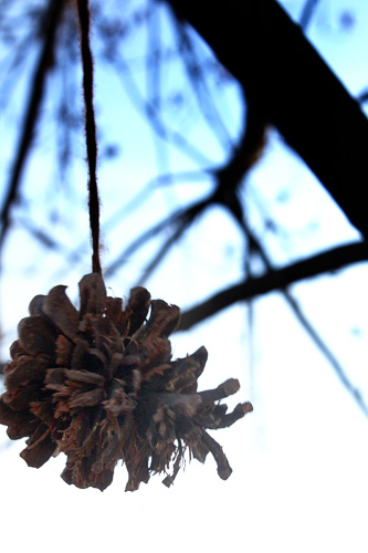 Pinecone Hanging from Tree